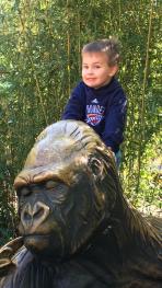 b zoo